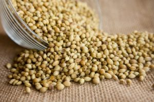 coriander spice health benefits